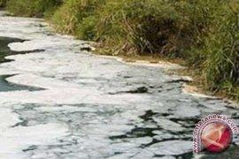 Ikan Mati di Sungai Tercemar Limbah Sawit
