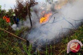 Perkumpulan hijau temukan kebakaran gambut di Tanjabar