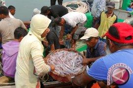Dinas Perikanan Belitung mencatat produksi cumi cukup tinggi