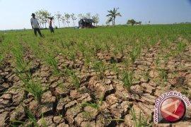 Kekeringan Bisa Diantisipasi Bila Ada Manajemen Air