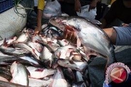 DKP Banten Genjot Produksi Ikan Tawar