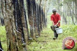 Produk Perkebunan Banten Tembus Pasar Ekspor