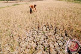 Pakar: bioteknologi penting untuk pertanian Indonesia
