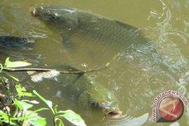 Produksi Ikan Air Tawar Sukabumi 16.100 Ton