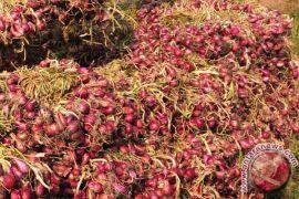 Kementan pastikan tak izinkan impor bawang merah