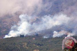Hutan lereng Gunung Sindoro terbakar