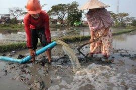 KTNA Banten Imbau Petani Lakukan Percepatan Tanam