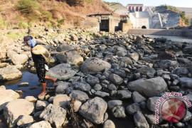 Air Sungai Cimanuk susut, areal pertanian terancam