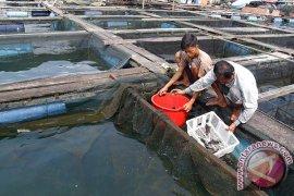 Tingkatkan produksi kembangkan budidaya kolam bioflok
