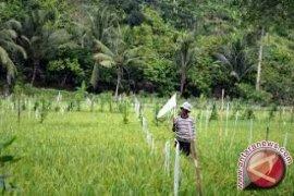 Nilai tukar petani di Jambi turun 1,53 persen