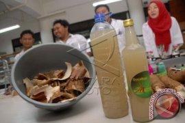 Mahasiswa IPB Buat Gula Dari Kulit Singkong