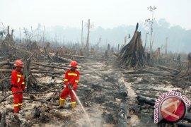 Polisi Tangani 219 Kasus Pembakaran Lahan dan Hutan