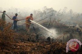 42.755 hektare ekosistem gambut di Kalbar telah direstorasi