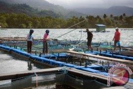 DKP Maluku Utara dorong pengembangan mina wisata