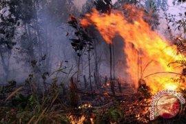 Polisi tetapkan 85 tersangka pembakar lahan