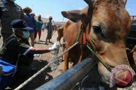 Bukittinggi siapkan 870 sapi kurban