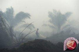 107 Orang Jadi Tersangka Kasus Pembakaran Hutan