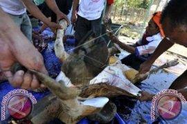Pakar: Daging Kurban Jangan Dibungkus Kresek Hitam