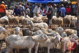 Pemprov Papua tetapkan tambahan libur Idul Adha