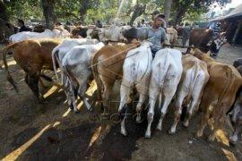 Pedagang Hewan Kurban Buleleng Keluhkan Konsumen Turun