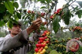 Ekspor kopi Aceh tumbuh 540 persen