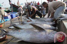 Perubahan iklim bisa pengaruhi ketersediaan ikan komersial