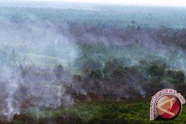 Satelit tak pantau pinus terbakar di Pidie