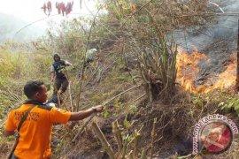 Luas Kebakaran Hutan Gunung Semeru Capai 200 Ha