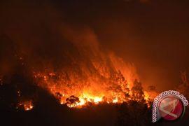 Ratusan pendaki masih terjebak kebarakan hutan Lawu