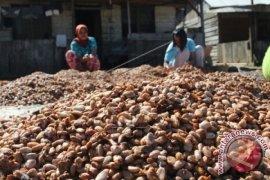 Harga komoditas perkebunan di Aceh Utara stabil