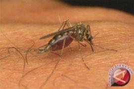 Ilmuwan Hasilkan Strain Nyamuk dengan Gen Pemblokir Malaria