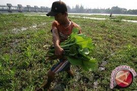 KTNA Banten Dorong Petani Kembangkan Tanaman Hortikultura