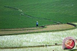 Kurangi Kemiskinan Lewat Perubahan Pertanian