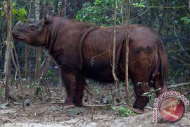 Lima mamalia besar satwa kunci Way Kambas