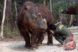 5 organisasi konservasi internasional selamatkan badak Sumatera