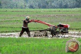 Ini Luas Sawah Yang Dijadikan Lahan Pertanian Abadi
