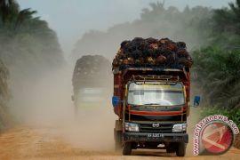 Ribuan ton sawit petani Bengkulu membusuk tak terjual