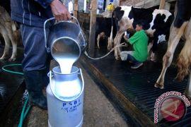 Bermitra dengan peternak susu, Kemenperin usulkan BMTDP untuk industri