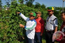 Sekda Banjar: Kacang Panjang Baik Untuk Kesehatan