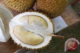 Durian Cimanggu Sukabumi Jajaki Pasar Internasional