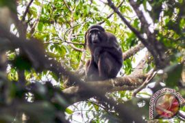 Dosen Lampung kembangkan aplikasi untuk memonitor flora-fauna