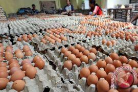 Pedagang khawatirkan harga telur jelang Ramadhan