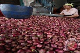 Bank Indonesia kembangkan bawang merah di Samosir