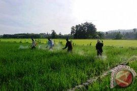 BWS Maluku akan bayar santunan penggarap lahan di lokasi bendungan Way Apu