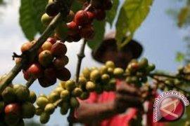 Perkebunan kopi Jambi 26.000 hektare