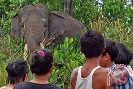 Kualitas pakan Gajah Yani diduga buruk