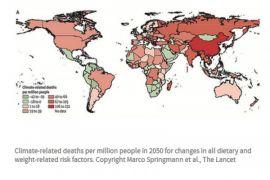 Perubahan iklim perparah kelaparan di Tanduk Afrika