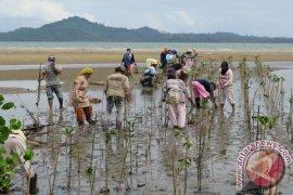 Ipkani Bantu 23.000 Batang Bibit Mangrove