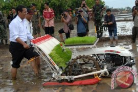Mentan Borong 200 Ton Benih IPB-3S
