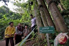 PT Timah dan UBB teliti tanaman endemik Bangka Belitung